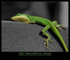 The Thoughtful Anole by Isquiesque