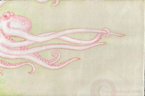 Albino octopus by oktopussy