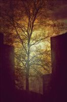 building against trees by aloner777