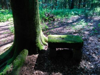 seat in the forest  by Mittelfranke