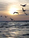 Into the Sunset by cindy1701d