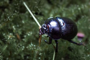 Scarab by sulevlange
