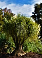 Adelaide Botanical Garden Series - 01 by pkewphotography