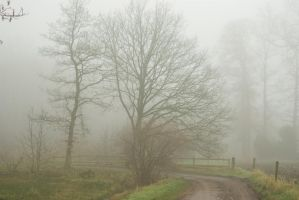 Misty and Mysterious 1 by steppelandstock