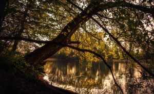 By the lake III by MoonKey19