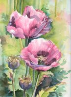 Pink poppies . Field by Ventum23
