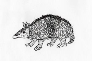 Armadillo by jamsketchbook