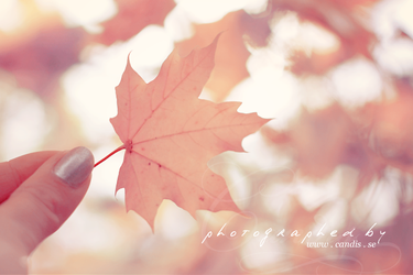 Leaf.. by CandisSara