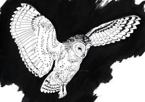 Owl 4 by Adoulie