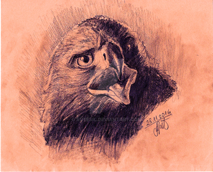 Eagle Charcoal Study 02 by Suyesil