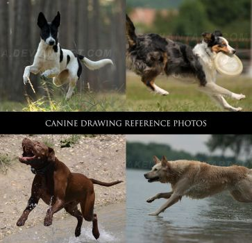 Canine Drawing Reference Photos 2 by Lakela
