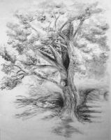 Old Maple Tree by LoVeras