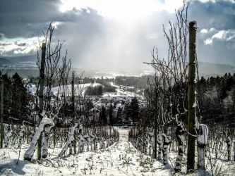 Hohentwiel_Snow and Vine by Anonymman
