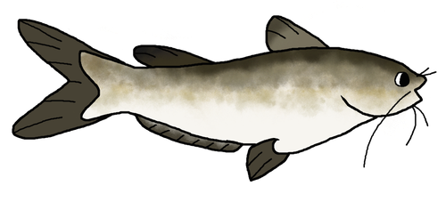 Channel Catfish by delcattylover469