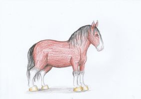 Majesty the Shire Horse by Louisetheanimator