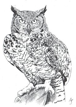 black-and-white owl by Ankaraven