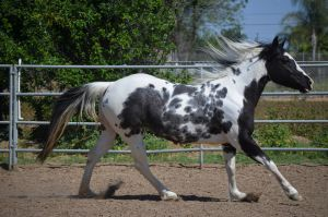 DWP FREE HORSE STOCK 47 by DancesWithPonies