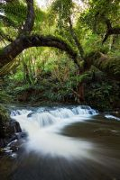 Deep in the Jungle by Mashuto