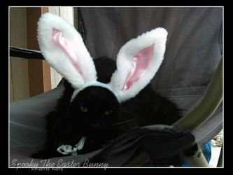 Spooky The Easter Bunny by Tizette-Creations