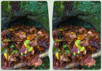Leafes inside a Rock Arc 3-D / CrossView / Stereo by zour