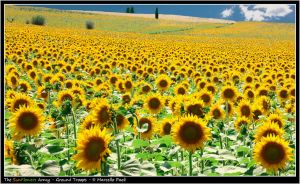 The SunFlowers Army - Troops by Marcello-Paoli
