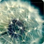 Network by jacqui-kate