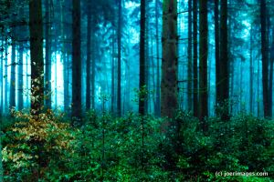 Misty Forest by joerimages