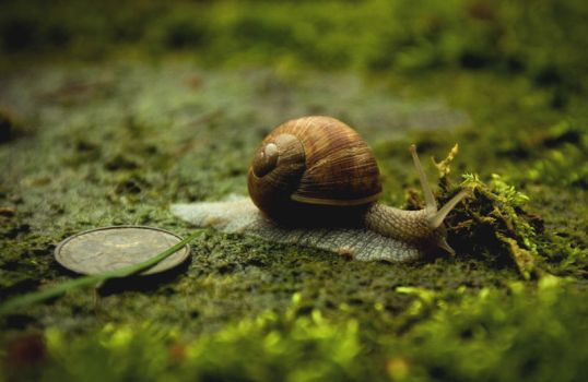 Snail and a coin by newintenz