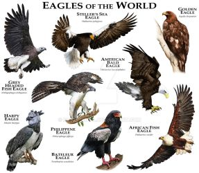 Eagles of the World by rogerdhall