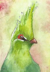 ACEO: Turaco by DundalkChild