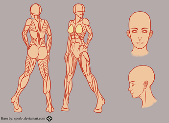 Adult Female Reference Sheet by Spork-