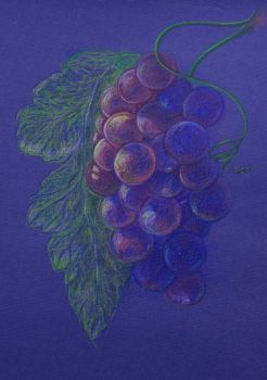 Grapes on the blue by LilithDarck