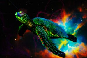 Dreams of a Cosmic Turtle by DMWVCS