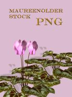 SYOCK PNG cyclamen by MaureenOlder
