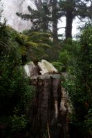 Tree stump by CathleenTarawhiti