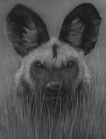 African Wild Dog by PencilSessions