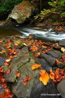 More Guest River Color 2 by TRBPhotographyLLC