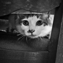 I see you too ... by Pouchou
