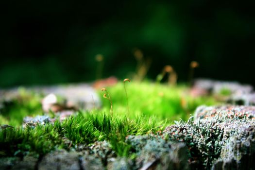 A wonderland of moss by PhotoHunter233