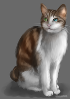 IT A CAT by BaserBeanz