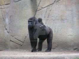 Gorilla and Child by AJChimaera