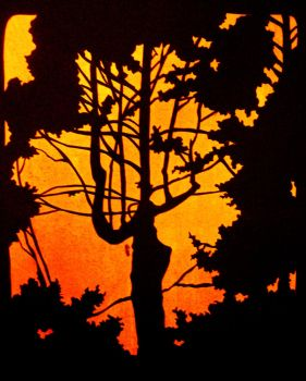 Neighbor Pine Tree Silhouette by eralastiel