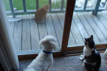 My Dog and Two Cats by LombaxFan