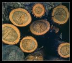 Wood pile.3.12.img, with story by harrietsfriend