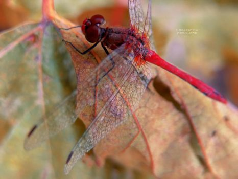 Autumn and dragonfly by HauntedBerry