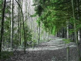 Nature Pic 1 by wyrickj