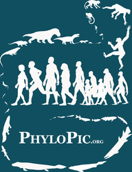 PhyloPic T-shirt: Human Evolution by keesey