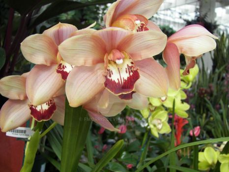 orchid by fmorris