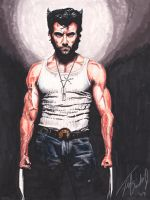 Wolverine by tdastick