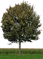 tree 33 png by gd08
